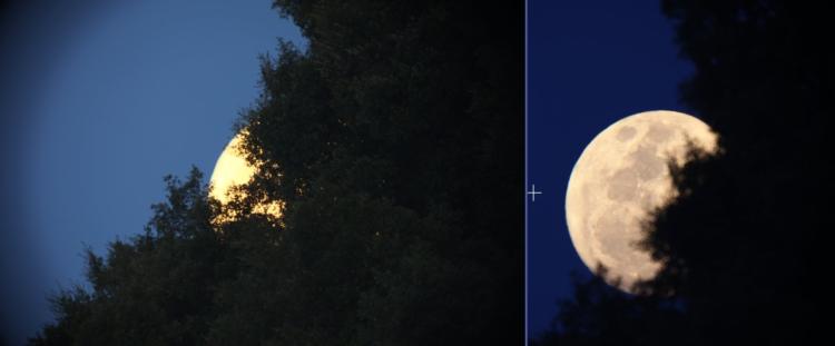 moon-trees